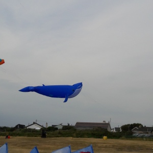 Kite Photo - Blind Photography